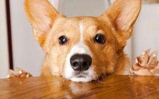 Какие орехи можно собакам