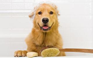 Чем и как можно мыть собаку и помыть щенка?
