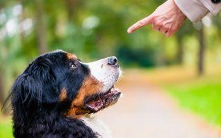 Как быстро научить собаку команде сидеть