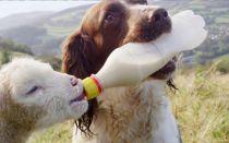 Можно ли давать собаке молоко?