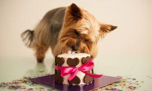 Можно ли сладкое собаке? Какой вред может принести конфета?