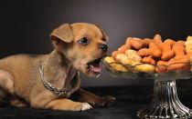 С какого возраста можно давать сухой корм щенкам?