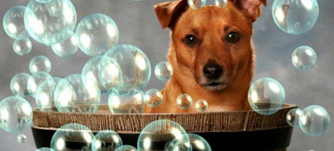 Как часто можно купать собаку и как правильно это делать