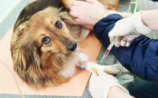 Энтерит у собак симптомы и лечение