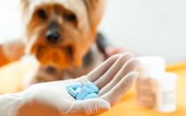 Какие обезболивающие можно давать собаке