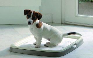 Можно ли и как приучить собаку ходить в туалет дома в лоток или на пеленку