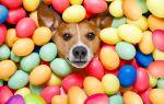 Можно ли давать собакам яйца вареные или сырые