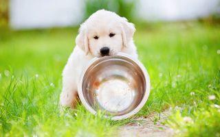 Чем можно кормить маленького месячного щенка.