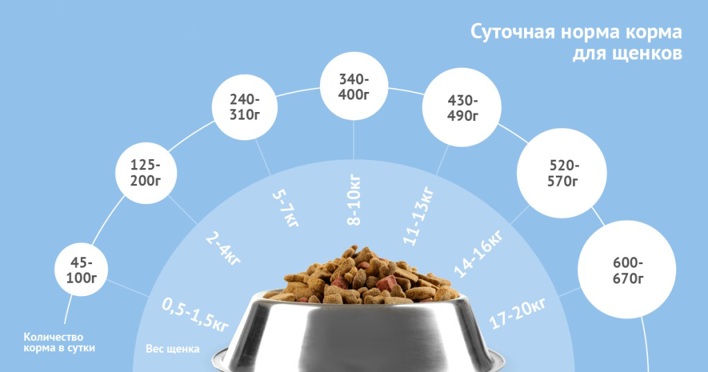 Как правильно кормить щенков сухим кормом