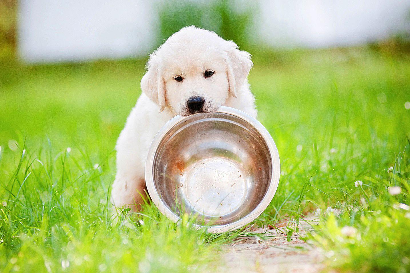 Чем кормить месячного щенка