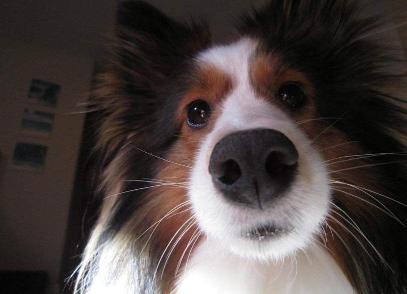 Красивая собака с усами