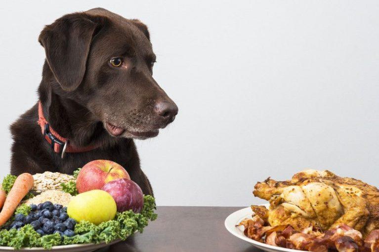 Можно ли собакам овощи и фрукты