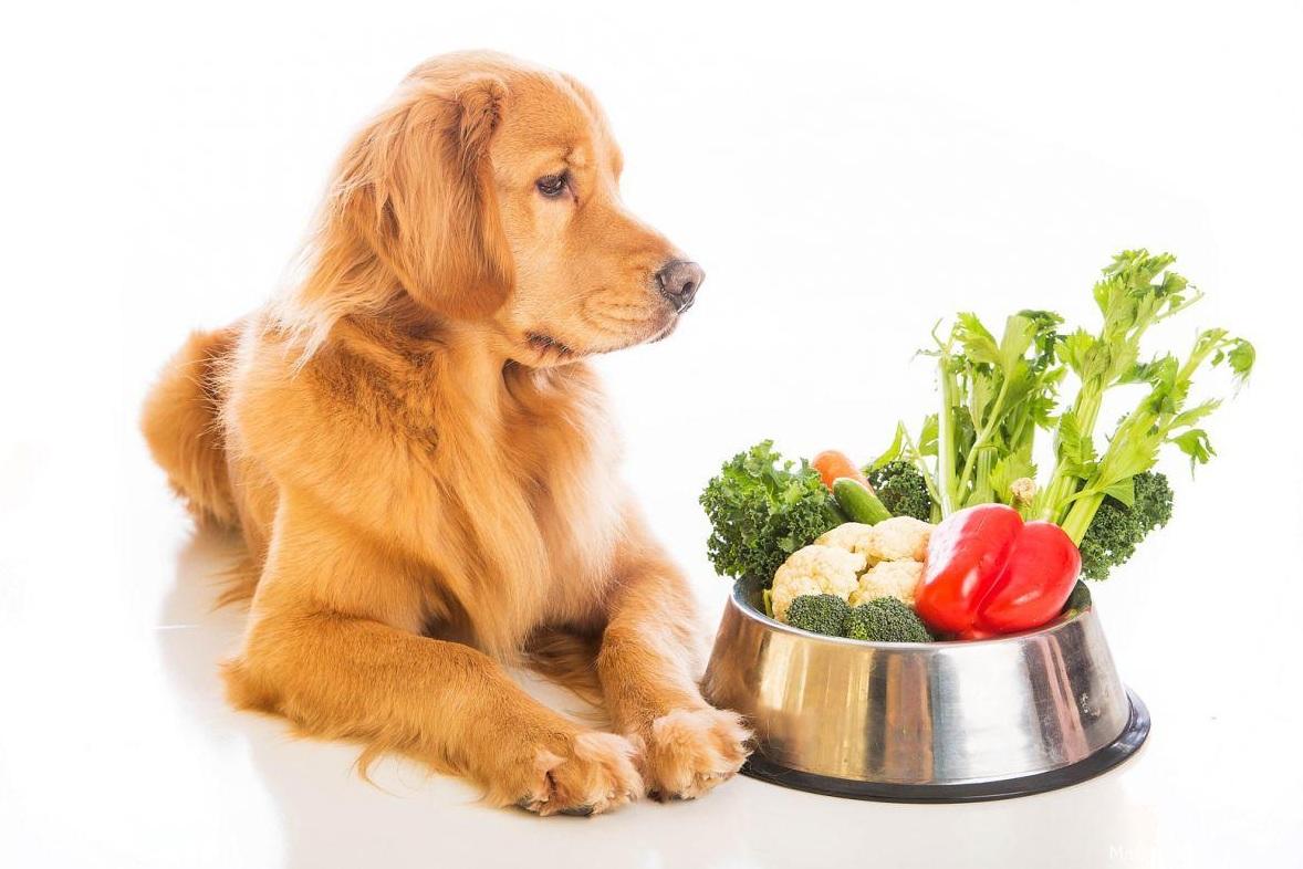 можно ли собаке овощи и фрукты