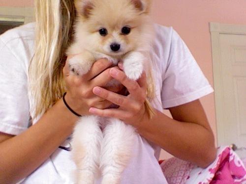 щенка держат в руках