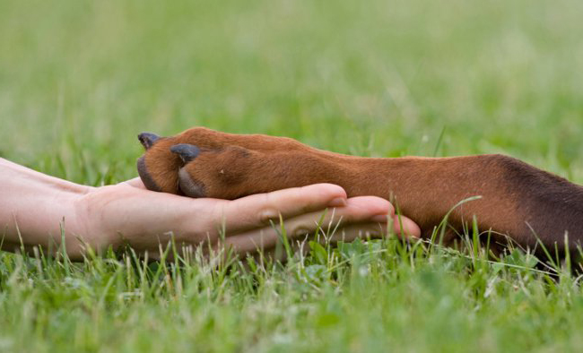 Можно ли собакам стричь когти, собака дала лапу человеку