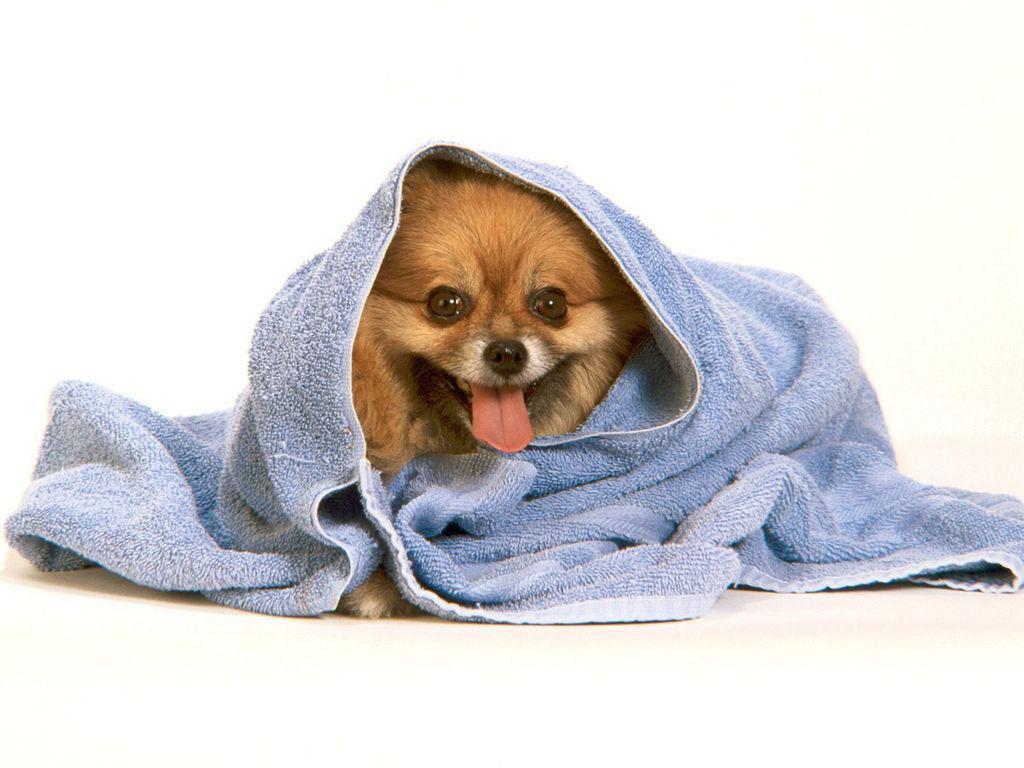 После купания обернуть полотенцем