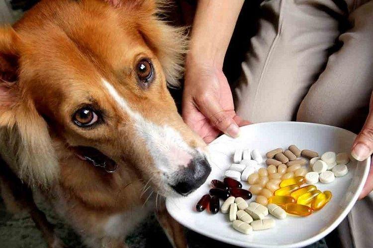Как собаке дать таблетку