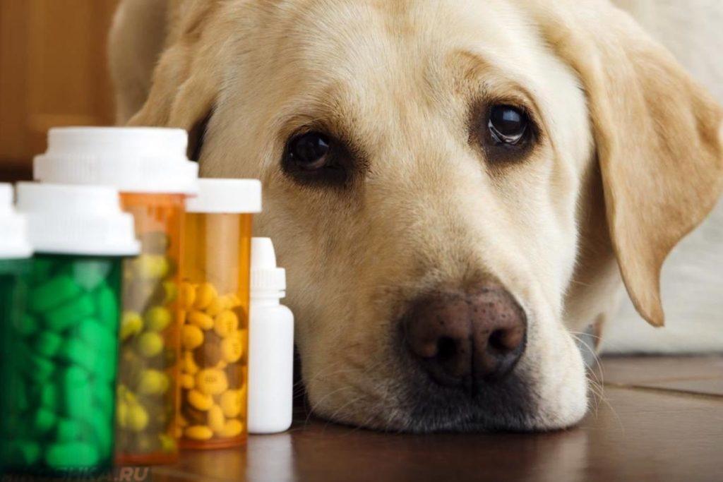 можно ли собакам давать аспирин