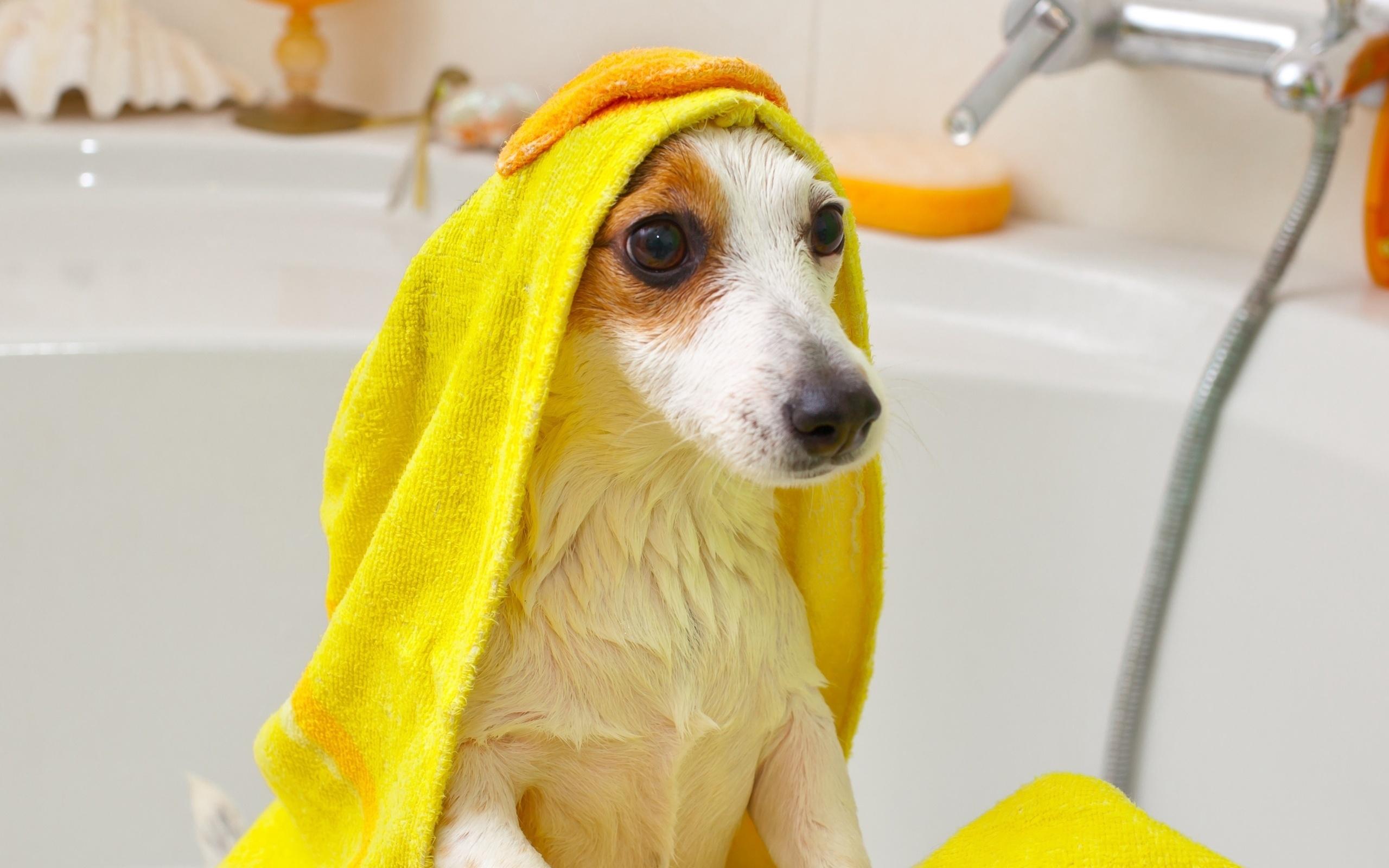 Щенок в полотенце в ванной комнате