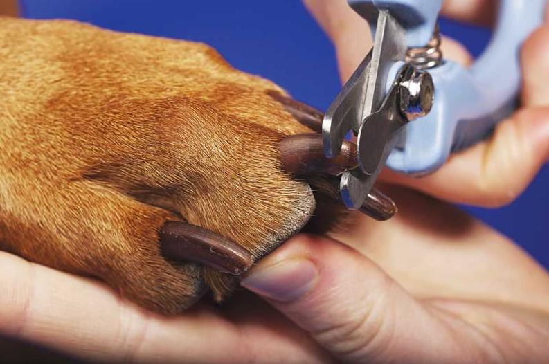 Можно ли собакам стричь когти