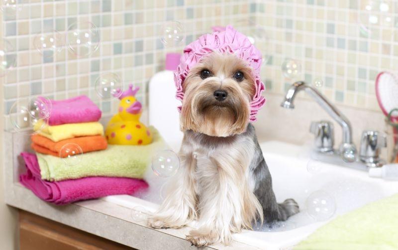 когда начинать мыть щенка