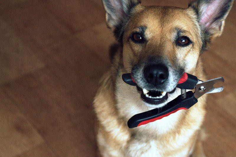 Можно ли собакам стричь когти, собака держит в пасти когтерезку