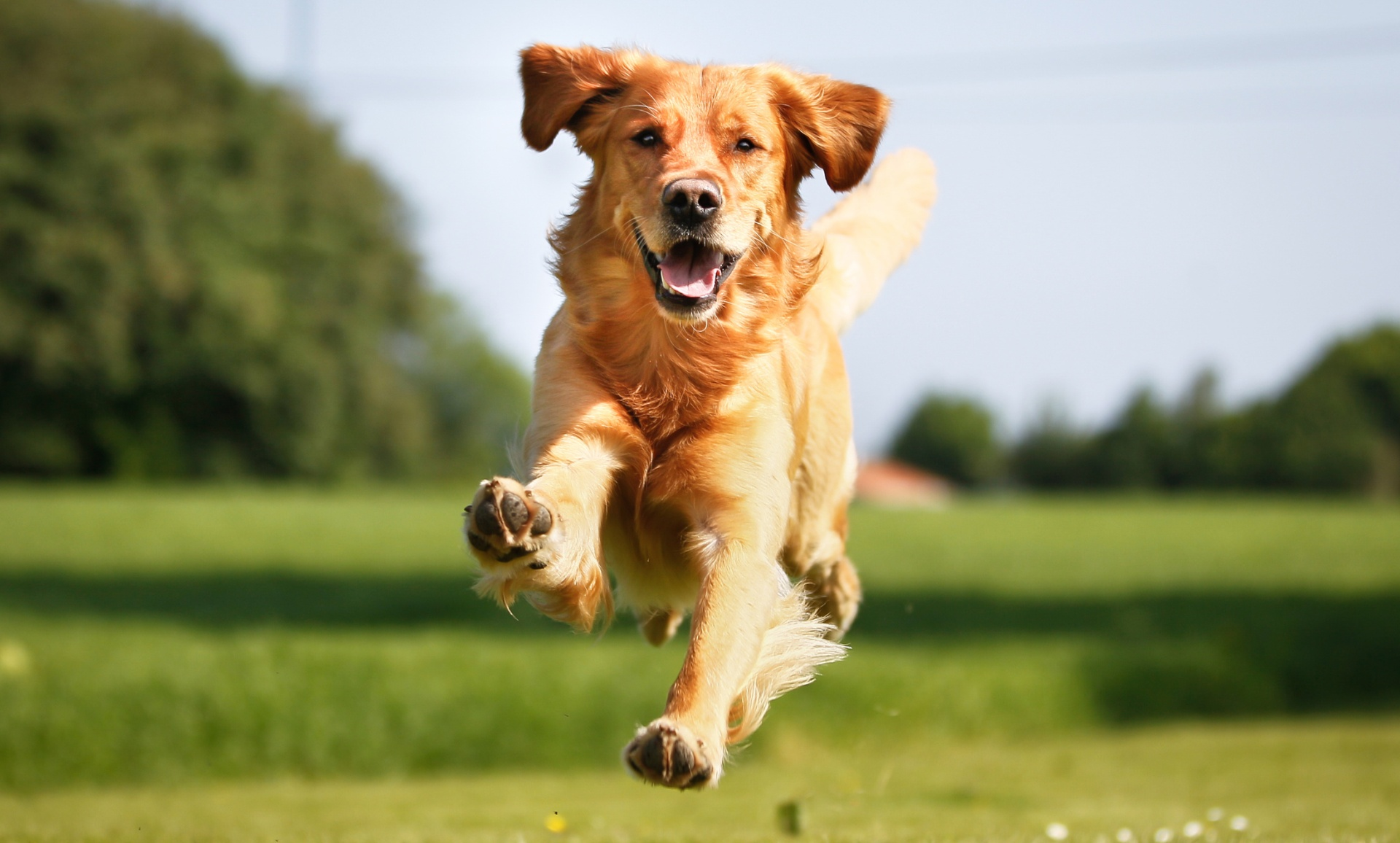 Собаке подстригли когти, она теперь может бегать