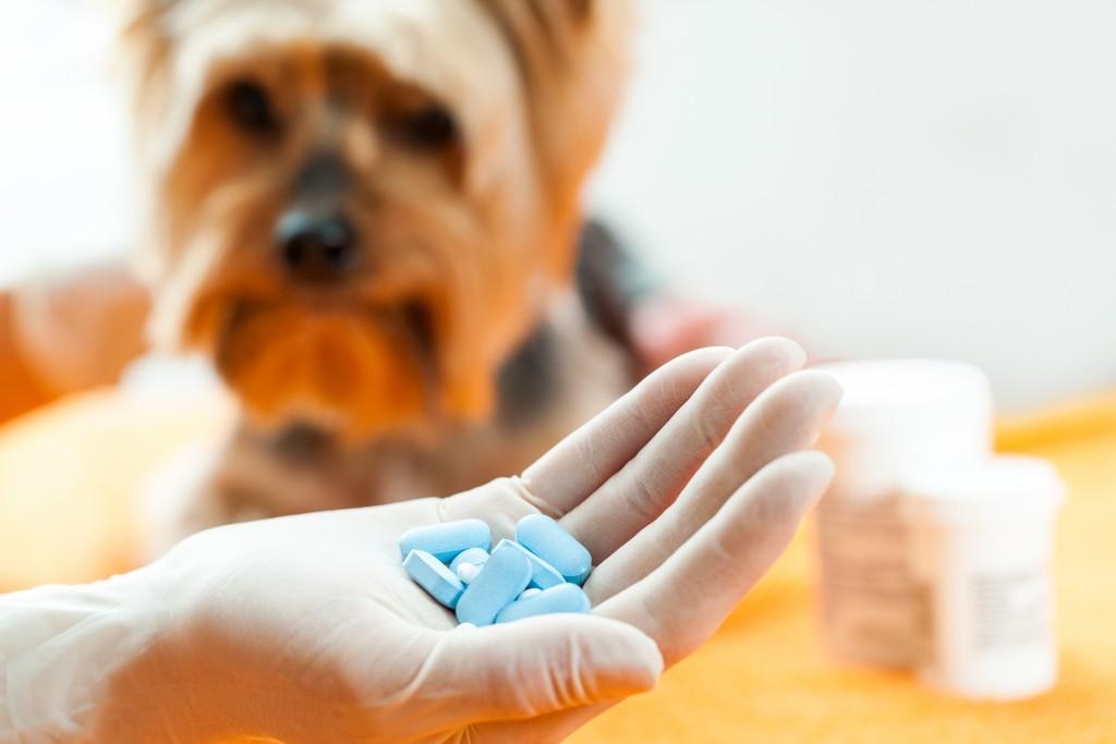 Какое обезболивающее можно дать собаке, а какое нет