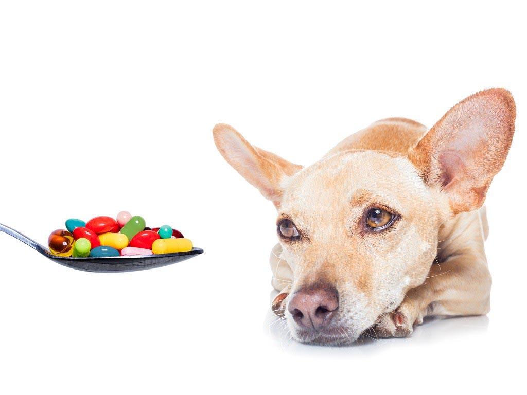 какое обезболивающее можно давать собакам
