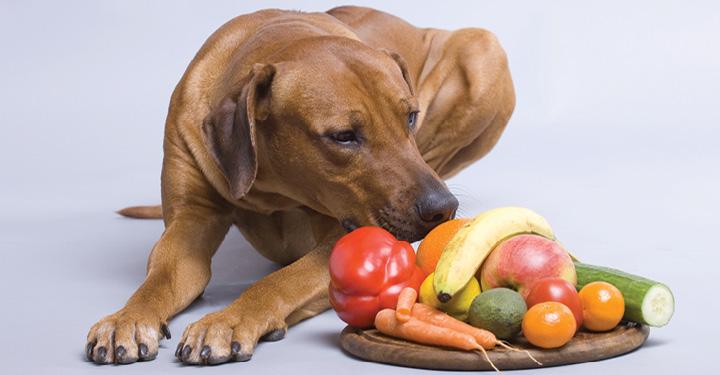 Можно ли собакам фрукты и овощи