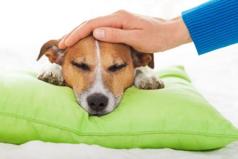 Собаку гладят рукой
