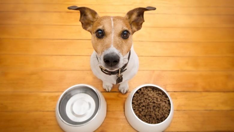 Можно ли кормить сухим кормом и натуральной пищей собаку одновременно