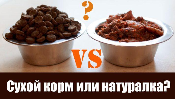 Натуральная пища или сухой корм