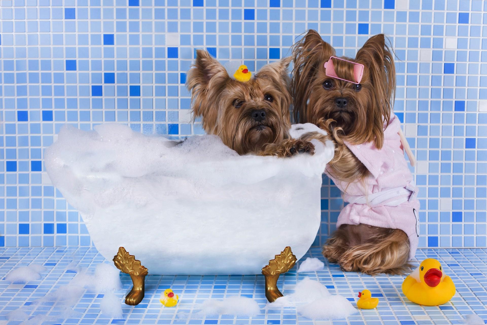 Маленькие собаки в ванне
