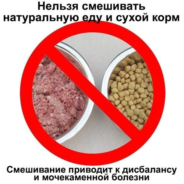 Нельзя смешивать натуральные продукты и сухой корм