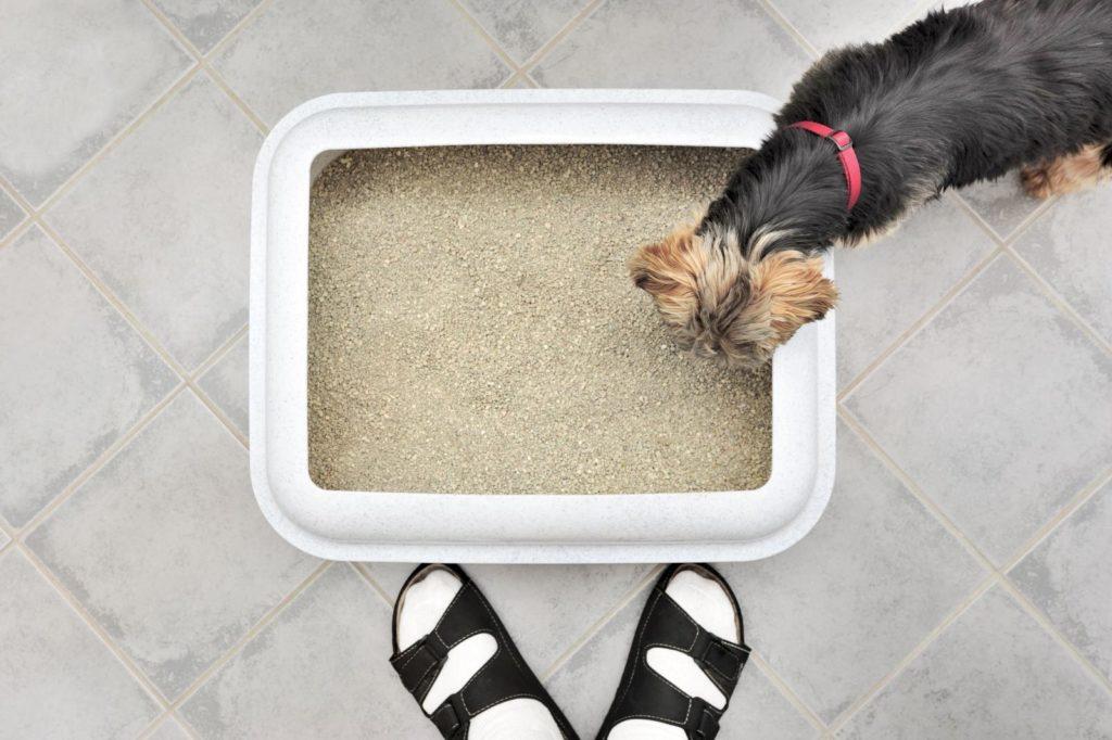 Лоток для собак
