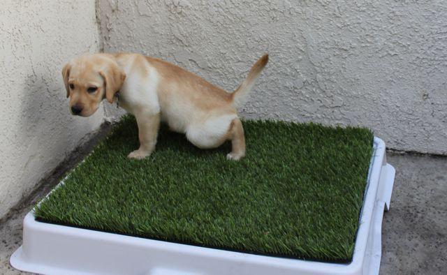 собака на лотке с травой