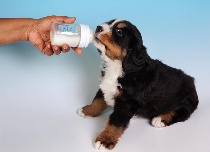 собак пьет молоко