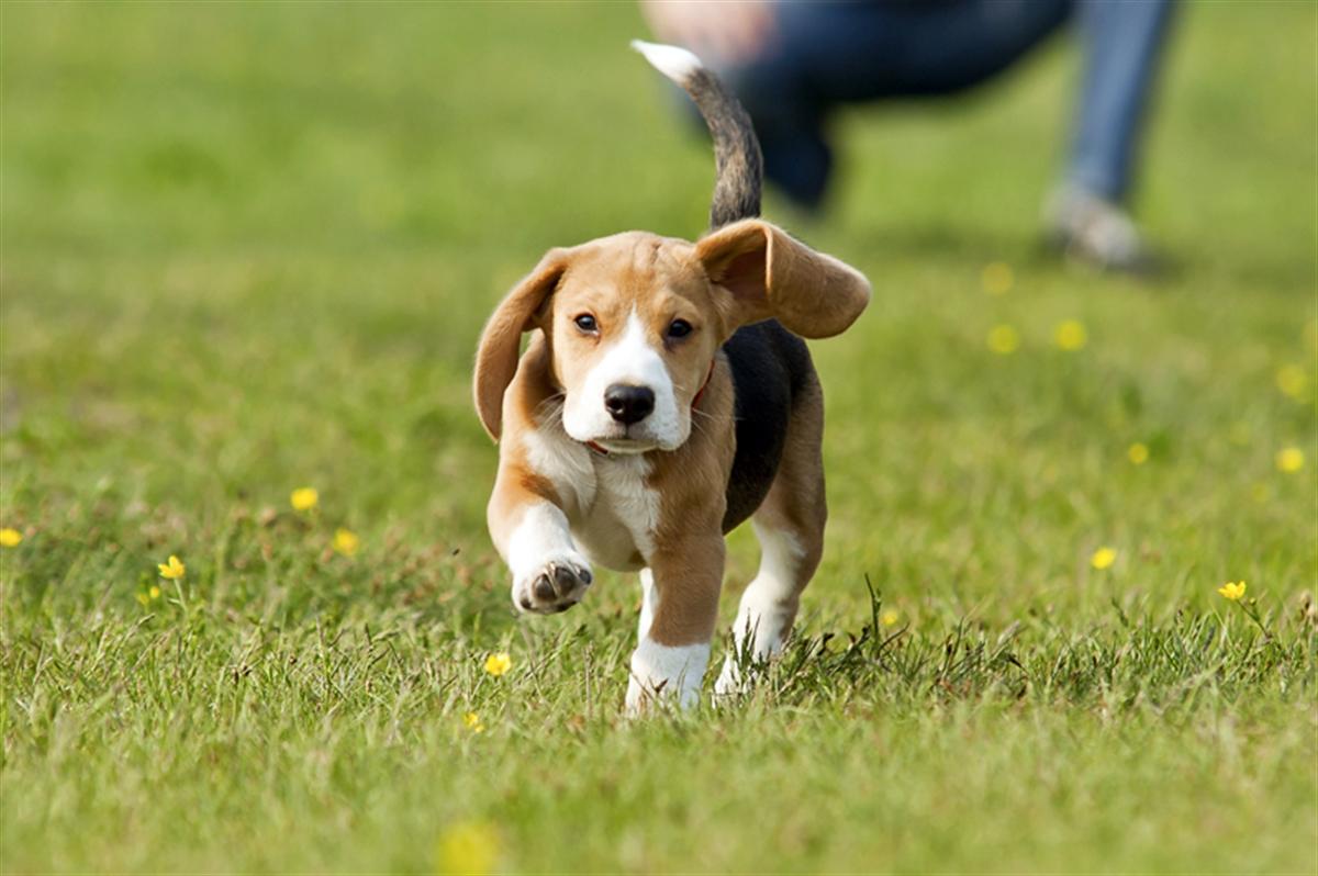 щенок бежит на улице по траве