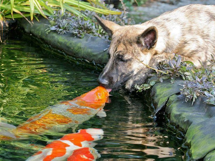 собака и рыбы