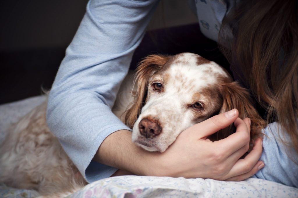 собака болеет энтеритом