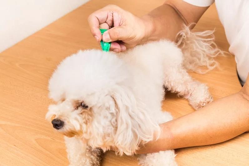 какие средства от клещей для собак
