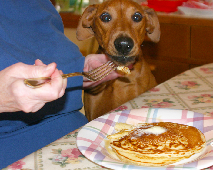 the dog is fed pancakes