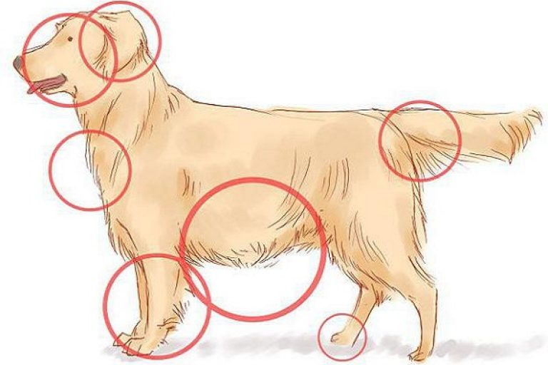 места на теле собак куда чаще впиваются клещи
