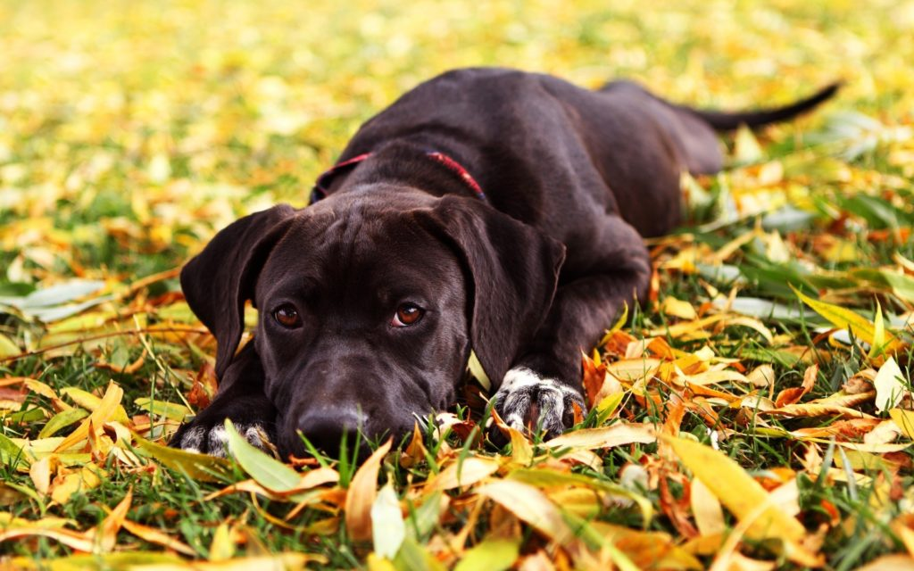 пес в осенней траве