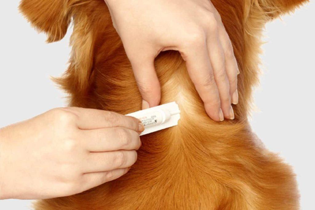 капли от клеще наносят собаке
